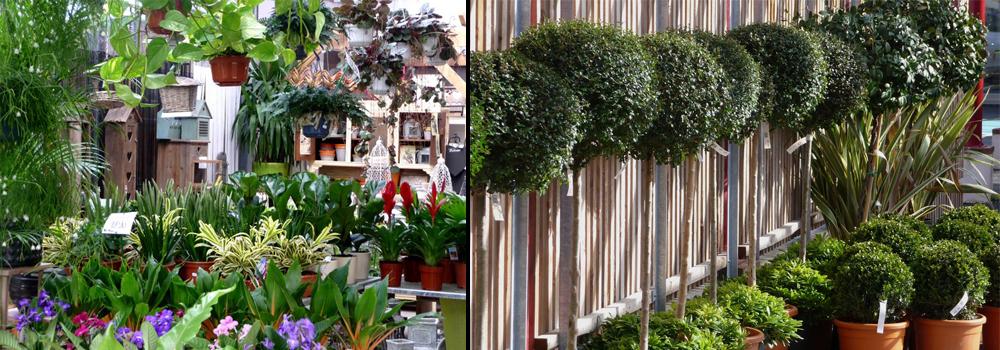 Le jardin du rudel adh rent des va albi tarn les for Jardin quatre saisons albi